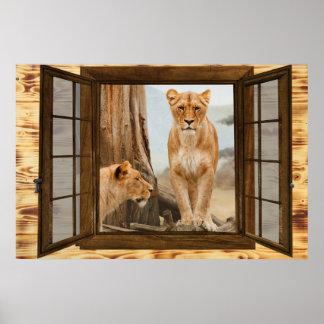 Póster ventana del león