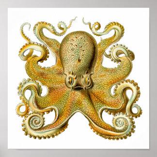 Póster Vintage Kraken, pulpo Gamochonia, Ernst Haeckel
