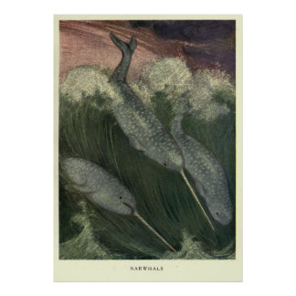 Póster Vintage Narwhal Painting (1909)