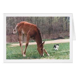 Potra y gato árabes tarjeta