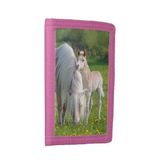 Potro lindo del bebé de los caballos de Haflinger