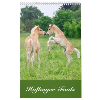 Potros 2017 de Haflinger Calendario De Pared