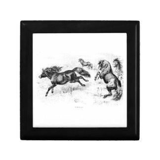 Potros de Shetland del vintage - caballo 1800's y Joyero Cuadrado Pequeño