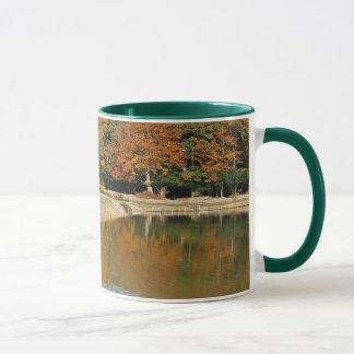 Potros que beben la taza