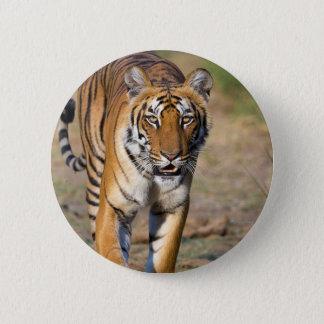 Presa de acecho de la tigresa femenina chapa redonda de 5 cm