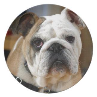 Presentación de color marrón blanquecina del perro platos
