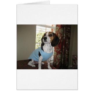 Presentación del beagle tarjeta de felicitación