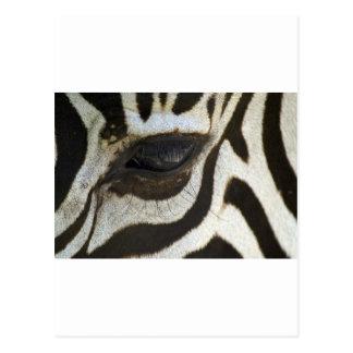 Presente blanco y negro del regalo del safari del postal