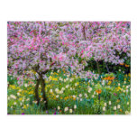 Primavera en el jardín de Claude Monet Postal
