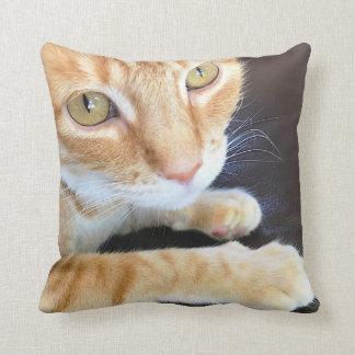 Primer anaranjado del gato cojín decorativo