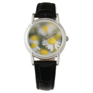 Primer de la flor de la manzanilla, Hungría Reloj