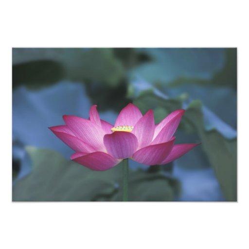 Primer de la flor de loto roja y de hojas verdes, arte fotografico