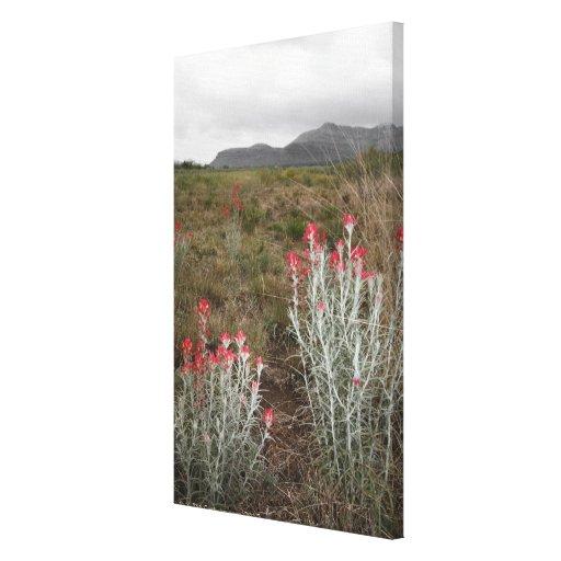 Primer de las plantas de desierto, Del Río, Tejas, Impresion De Lienzo