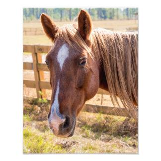 Primer de un caballo de Brown en una fotografía de Foto