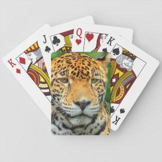 Primer de una cara del jaguar, Belice Barajas De Cartas