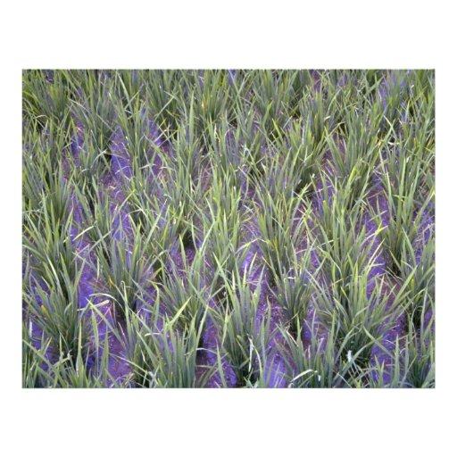 Primer del arroz de arroz, Indonesia en el R de Co Flyer Personalizado