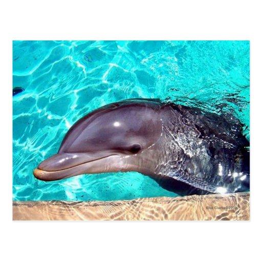 Primer del delfín postal