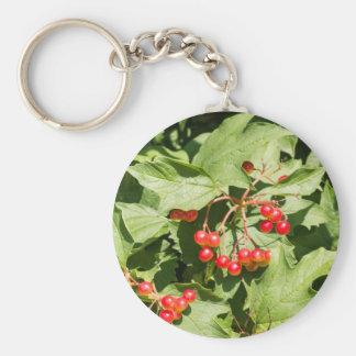 Primer del opulus del viburnum de las hojas y de llavero redondo tipo chapa