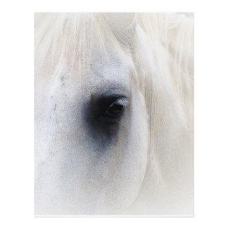 Primer hermoso del caballo blanco