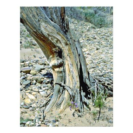 Primer torcido del tronco tarjetón