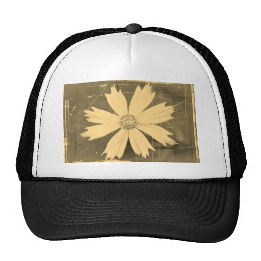 Primer viejo de la flor del cosmos del amarillo de gorras de camionero