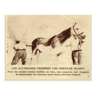 Primera Guerra Mundial, caballos blancos pintados Postal