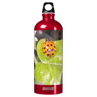 Proa de lady mariquita botella de agua SIGG