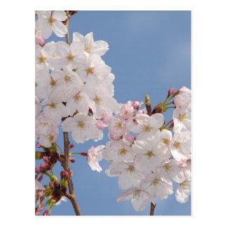 Productos hechos en casa de las flores de Sakura Postal