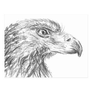 Pronto Eagle Portrait Postal