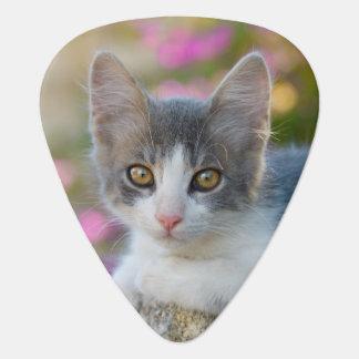 Púa De Guitarra Amantes mullidos del gato de la foto del gatito