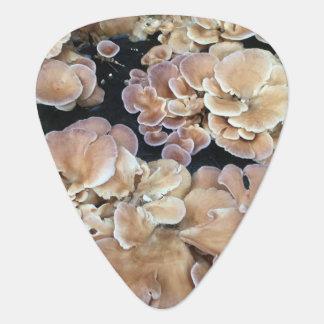 Púa de guitarra de los hongos de la flor
