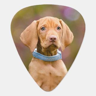 Púa De Guitarra Foto puppyeyed linda //del perrito del perro de