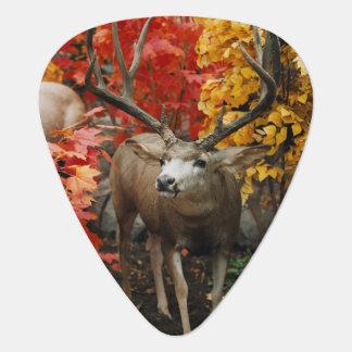 Púa De Guitarra Whitetail en otoño