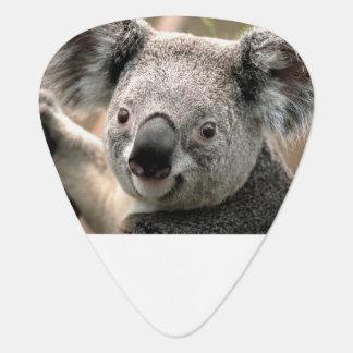 Púas de guitarra de la koala