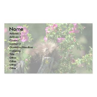 Puerco-joven en color de rosa salvaje tarjetas de visita