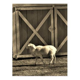 Puertas de la cabra y de granero del tono de la postal