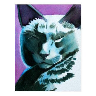 Puerto deportivo del gato negro real tarjetas postales