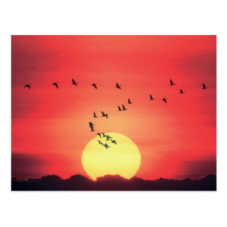 Puesta del sol colorida hermosa con volar de los postal