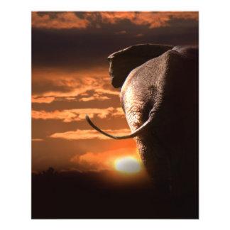 Puesta del sol con el elefante folleto 11,4 x 14,2 cm