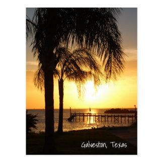 Puesta del sol de la palmera postal
