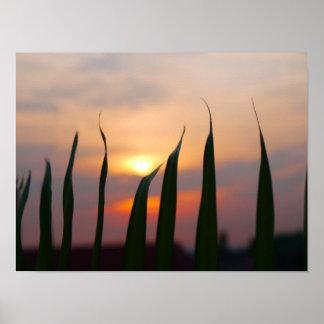 Puesta del sol de nuestro poster del tejado póster
