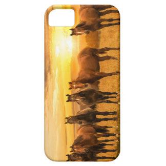 Puesta del sol del caballo funda para iPhone SE/5/5s