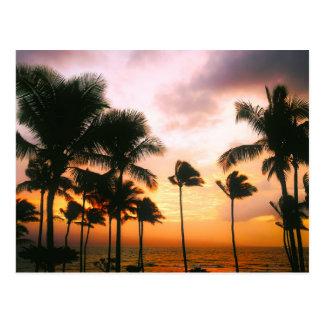 Puesta del sol hawaiana de las palmeras de la postal