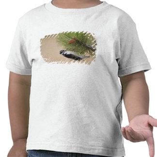 Pulsación de corriente melenuda, villosus del camiseta