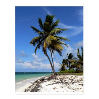 Punta Cana, República Dominicana, palmera del coco Postal