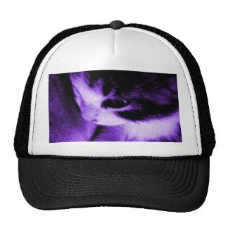 Púrpura del contraste del gatito gorras