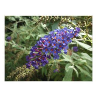Púrpura Fotografía