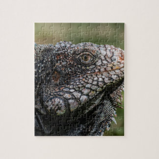 Puzzle 1920px-Iguanidae_head_from_Venezuela