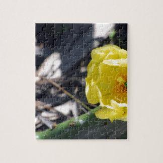 Puzzle abeja iridiscente en la flor de los nopales