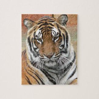 Puzzle Alquileres Tigres en la reflexión